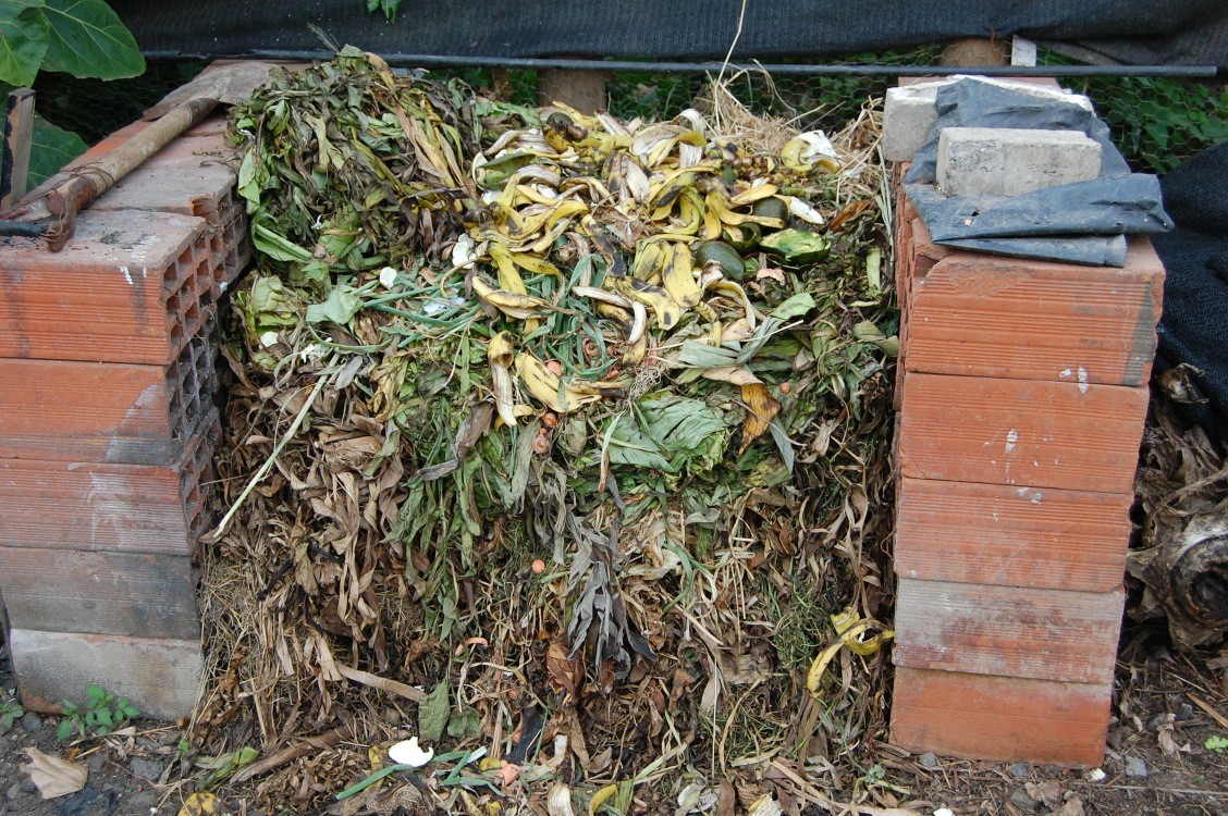 The compost pile