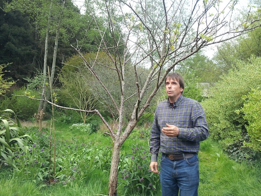 martin-in-forest-garden